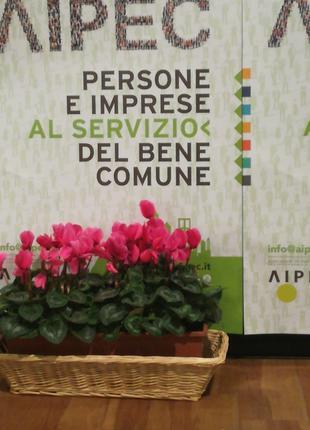 Primo Convegno Nazionale AIPEC